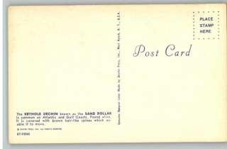 Postcard Legend of the Sand Dollar PoemJesus