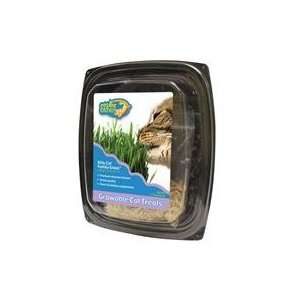 Best Quality Cosmic Kitty Cat Family Grass / Size By