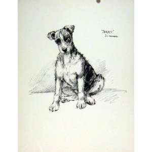 Dog Sketch Drawing Pencil Hound Naturalist Memory 1936