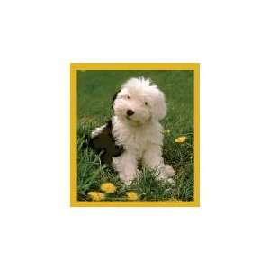 New Magnetic Bookmark Old English Sheepdog Puppy High