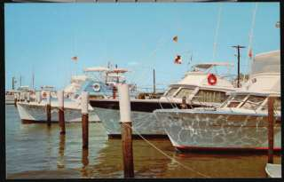 Snook deep fishing adult unisexshirtebay world for Deep sea fishing jacksonville fl