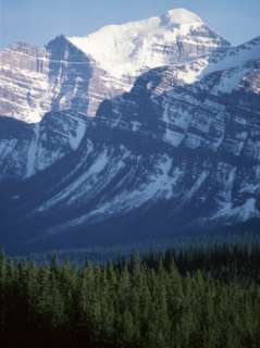 Banff National Park in Canada with Pine Tree Forest Photographic Print