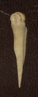 Indian Artifacts  Nice Indiana Green Dove Tail Point Arrowhead