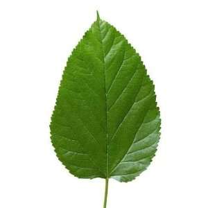 Big Tree Leaf Texture   Peel and Stick Wall Decal by