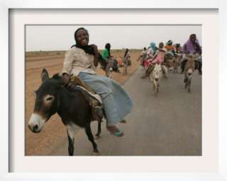 Searches Related To Riding Donkey Donkeys For Sale